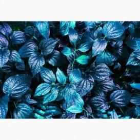 Fototapeta - FT7109 - Zeleno-modré listy