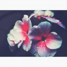 Fototapeta - FT7114 - Bielo-ružové vintage kvety