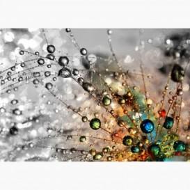 Fototapeta - FT7186 - Farby svetla