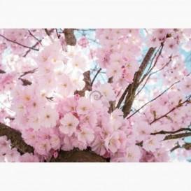 Fototapeta - FT7236 - Ružové kvety čerešne