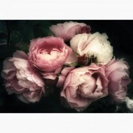 Fototapeta - FT7251 - Kytica rúži