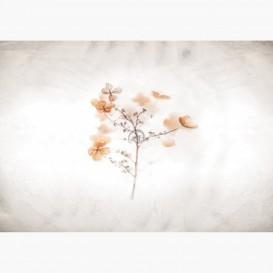Fototapeta - FT7253 - Oranžové kvety
