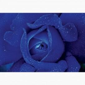 Fototapeta - FT7338 - Modrá ruža