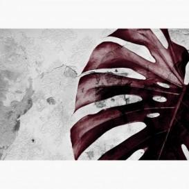 Fototapeta - FT7361 - Červená monstera na textúre starej steny
