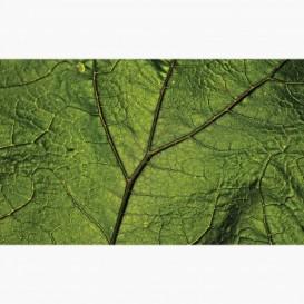 Fototapeta - FT7410 - Detail zelený listu