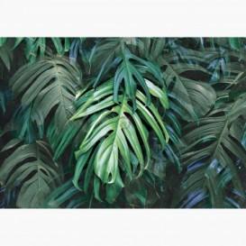 Fototapeta - FT7499 - Zelené listy Monstery