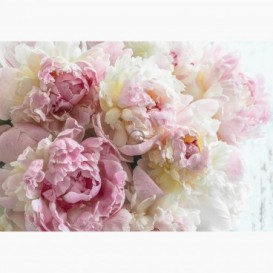 Fototapeta - FT7591 - Ružovo-biele ruže