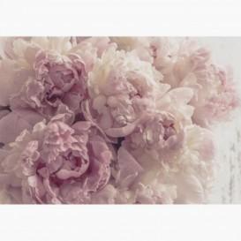 Fototapeta - FT7592 - Ružovo-biele ruže s clonou