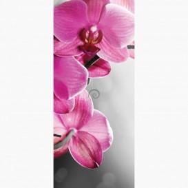 Fototapeta - DV1051 - Ružová orchidea