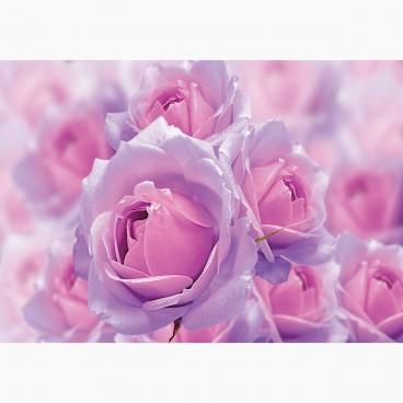 Abstraktní květiny
